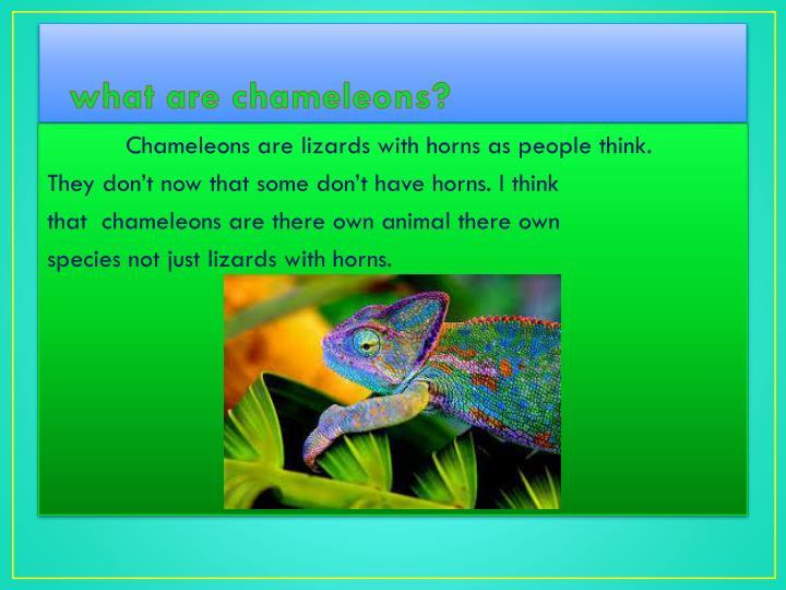 what are chameleons?
