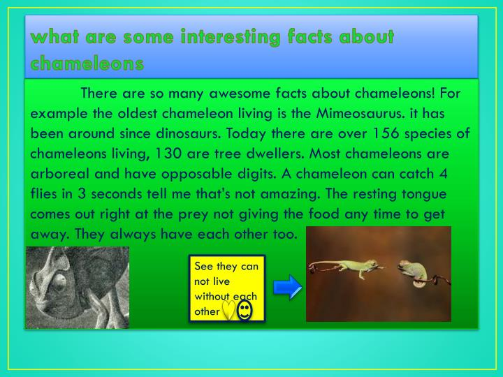 what are some interesting facts about chameleons