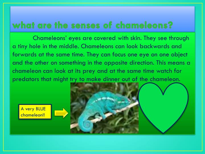 what are the senses of chameleons?
