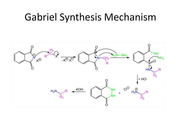 Gabriel Synthesis Mechanism