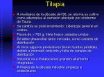 tilapia1