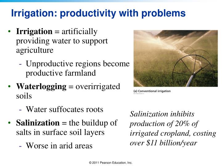 Irrigation: productivity with problems