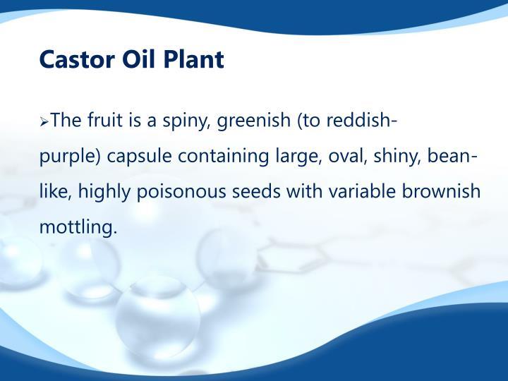 Castor Oil Plant