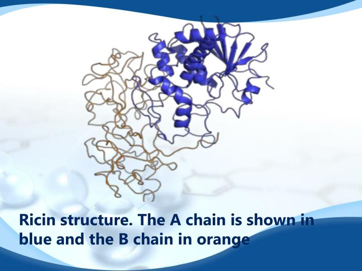 Ricin structure. The A chain is shown in blue and the B chain in orange