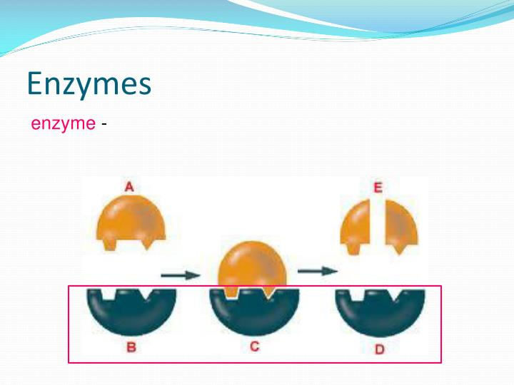 Enzymes2