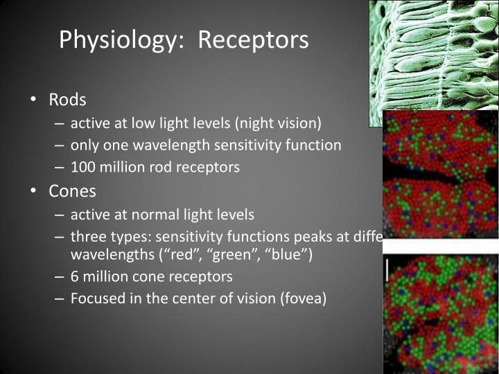 Physiology:  Receptors