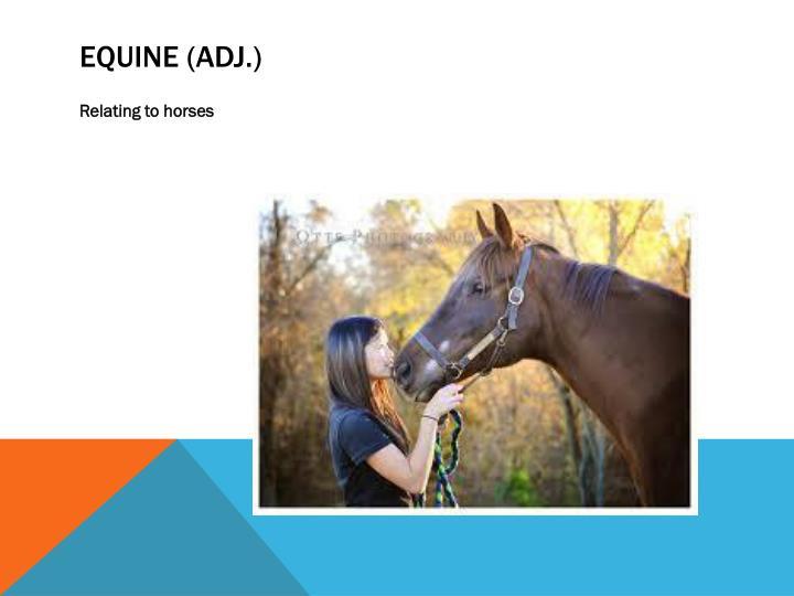 Equine (adj.)