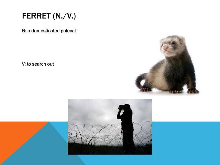 Ferret (n./v.)