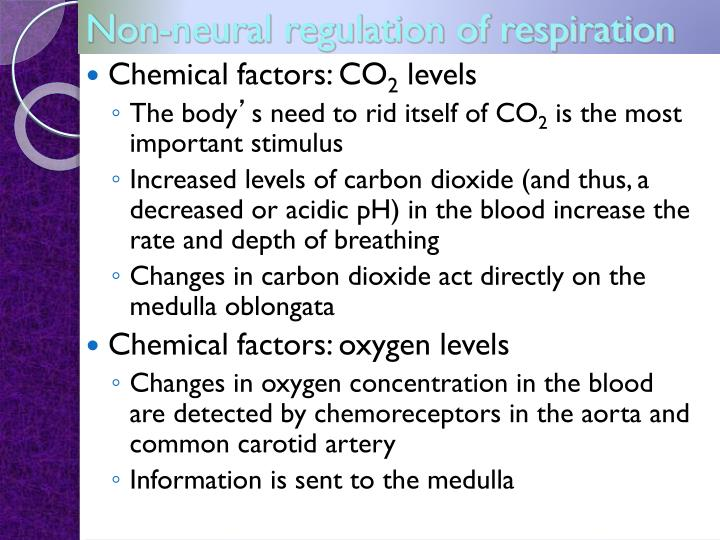 Non-neural regulation of respiration