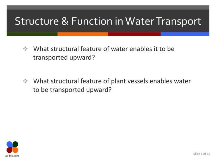 Structure & Function in Water Transport