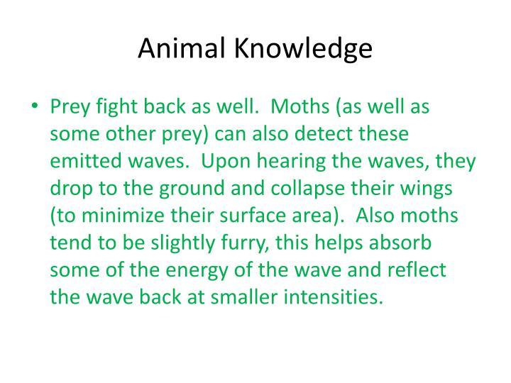 Animal Knowledge