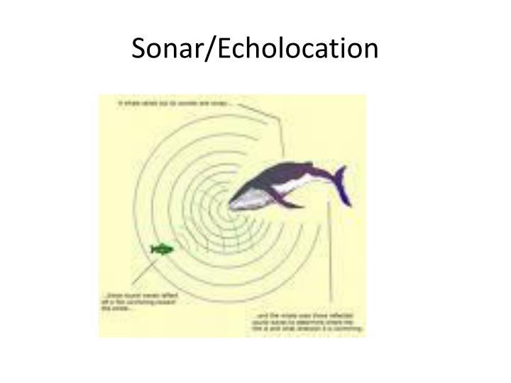 Sonar/Echolocation