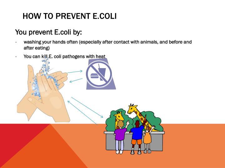 How to prevent E.coli