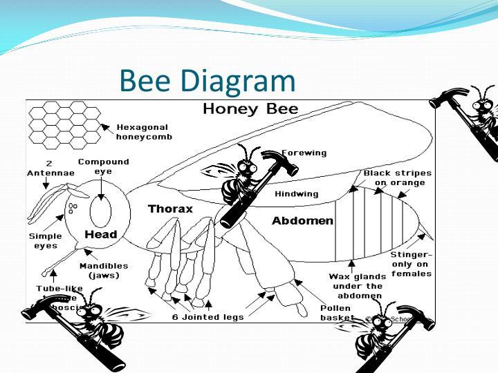 Bee Diagram