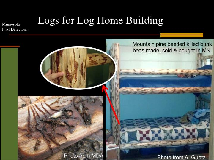 Logs for Log Home Building