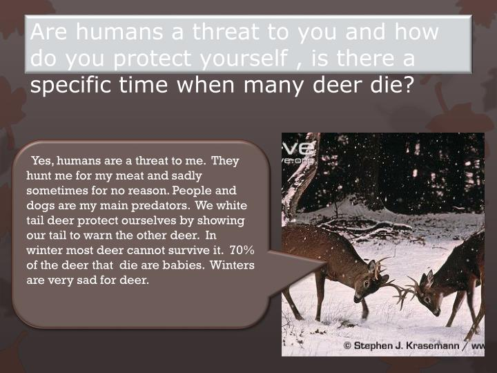 Are humans a threat to you and how do you protect yourself , is there a specific time when many deer die?