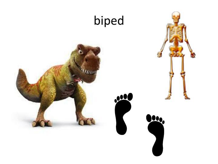 biped