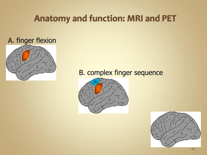 Anatomy and function: MRI and PET