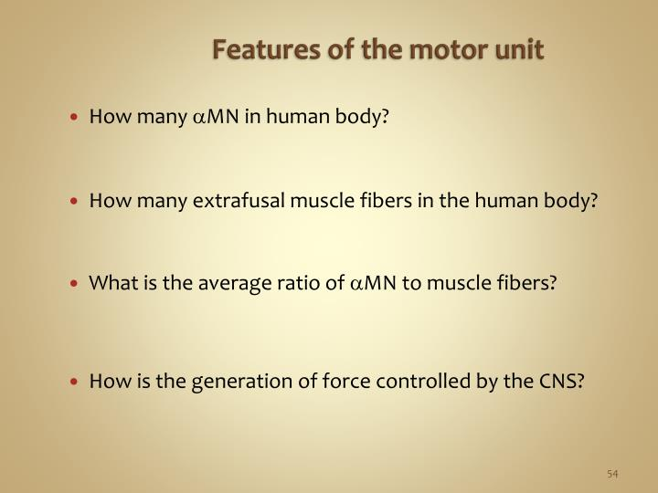 Features of the motor unit