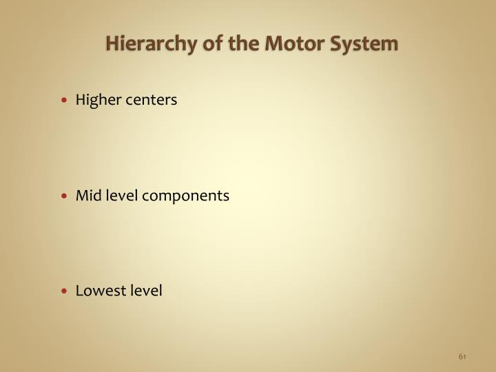 Hierarchy of the Motor System