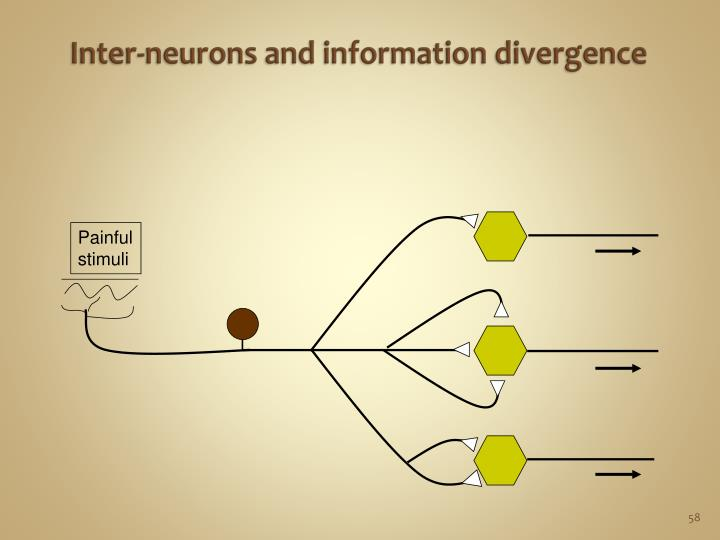 Inter-neurons