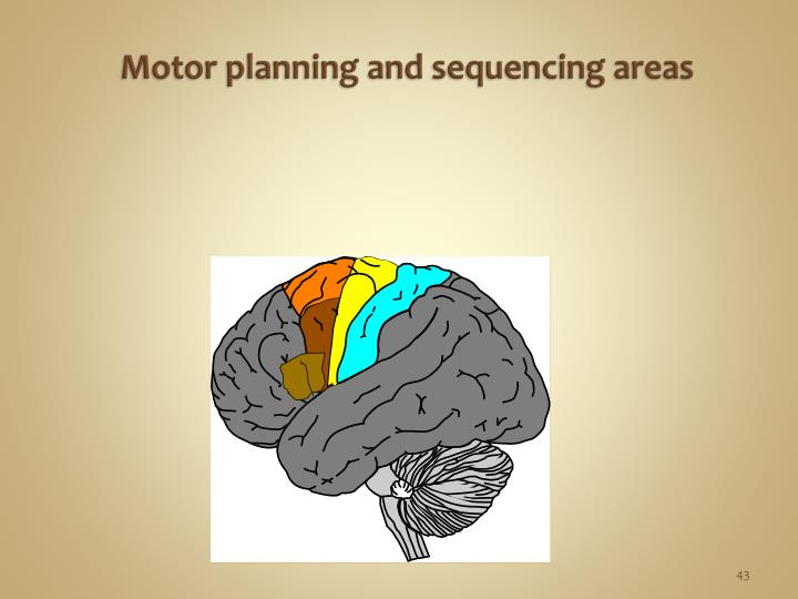 Motor planning and sequencing areas