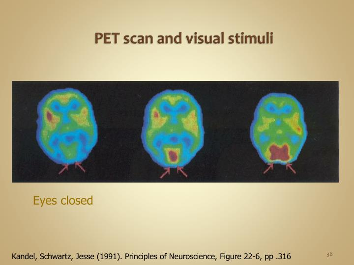 PET scan and visual stimuli