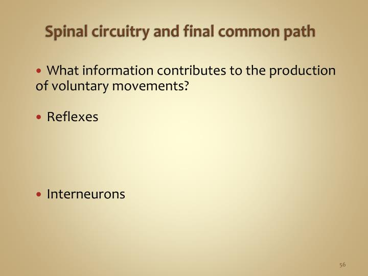 Spinal circuitry and f
