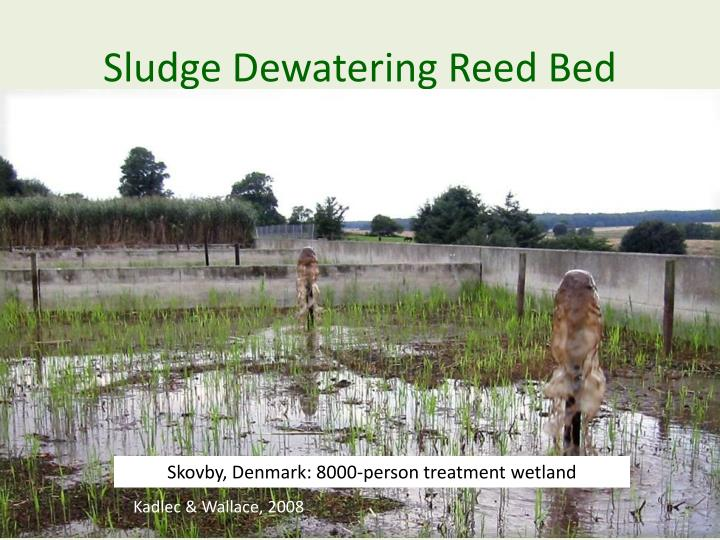 Sludge Dewatering Reed Bed