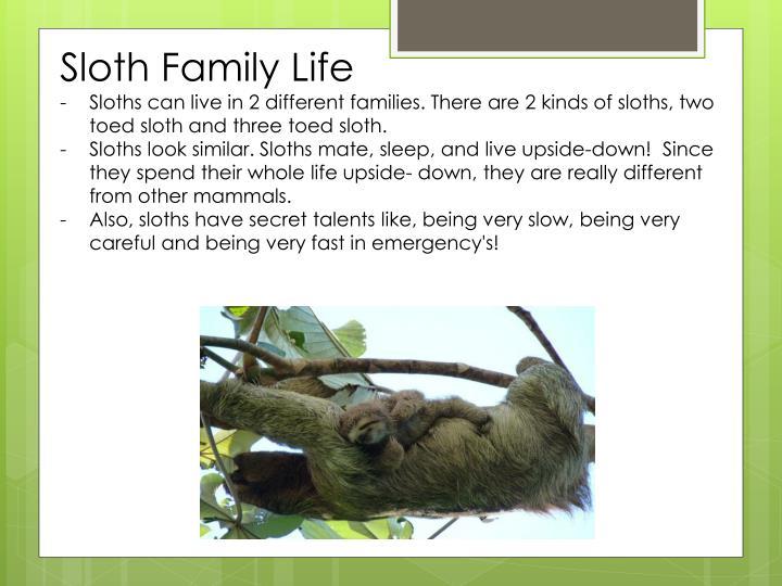 Sloth Family Life