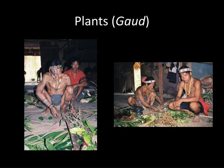Plants (