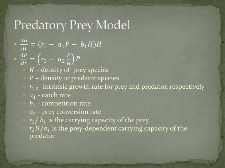 Predatory Prey Model
