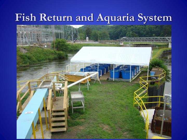 Fish Return and Aquaria System