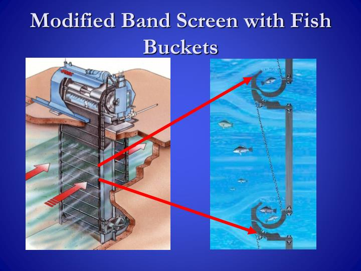 Modified Band Screen with Fish Buckets
