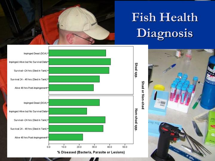 Fish Health Diagnosis