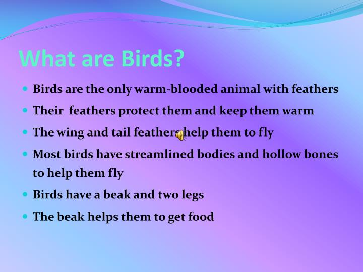 What are Birds?