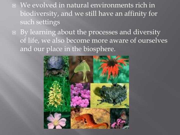 We evolved in natural environments rich in biodiversity, and we still have an affinity for such settings