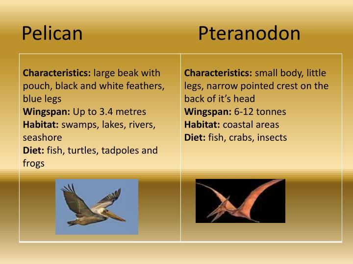 PelicanPteranodon