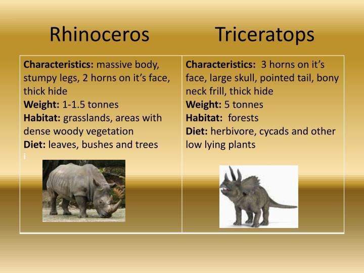 Rhinoceros    Triceratops