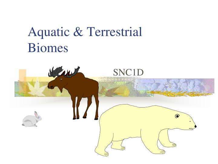 Aquatic terrestrial biomes