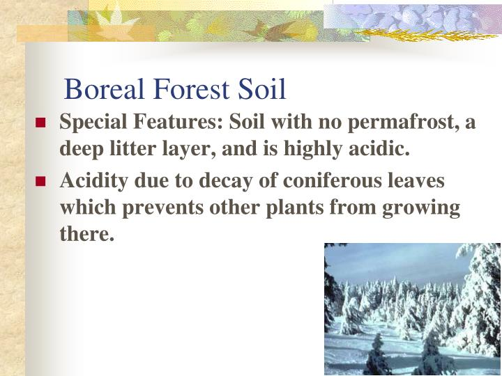 Boreal Forest Soil