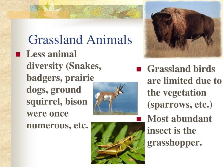 Less animal diversity (Snakes, badgers, prairie dogs, ground squirrel, bison were once numerous, etc.