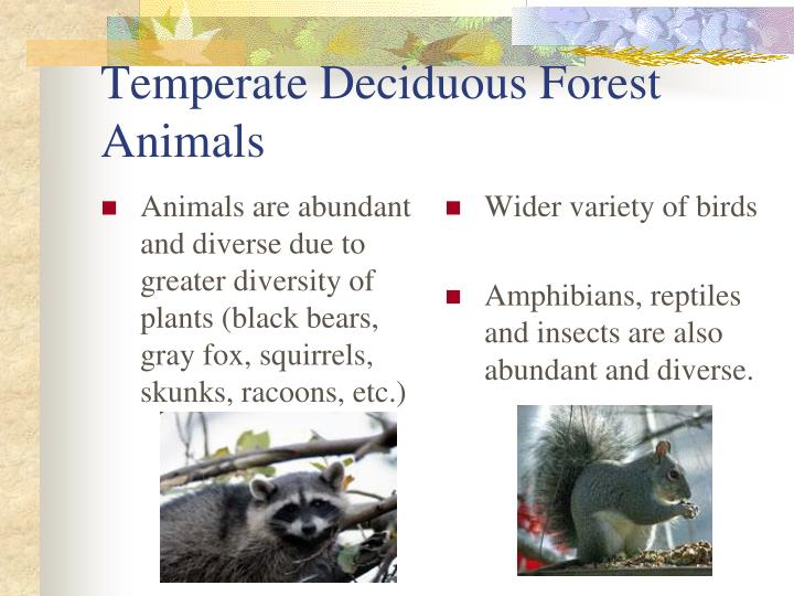 Animals are abundant and diverse due to greater diversity of plants (black bears, gray fox, squirrels, skunks, racoons, etc.)