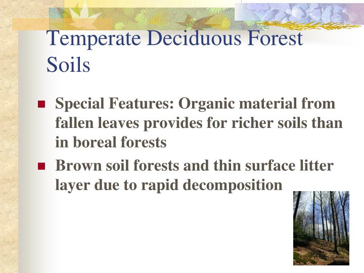 Temperate Deciduous Forest Soils