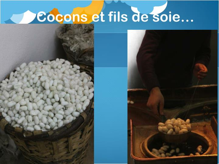 Cocons et fils de soie…