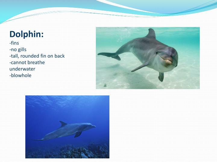 Dolphin: