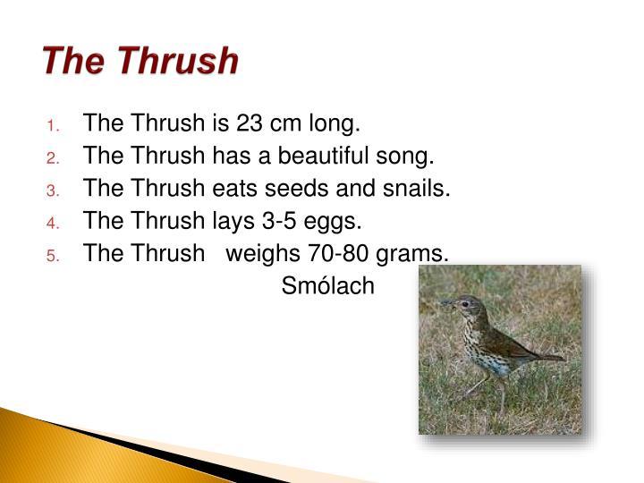 The Thrush