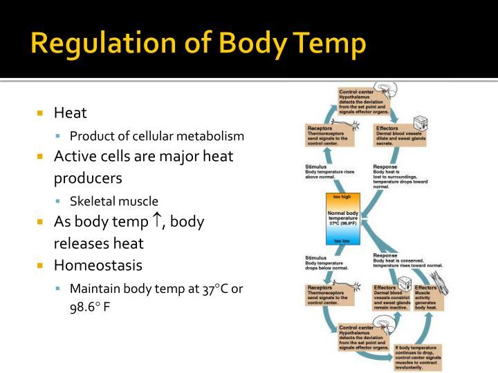 Regulation of Body Temp