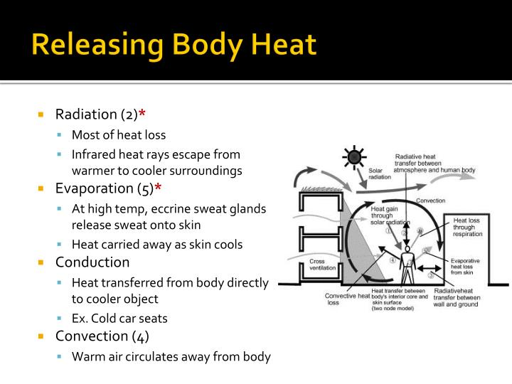 Releasing Body Heat