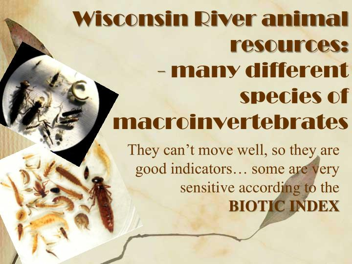 Wisconsin River animal resources: